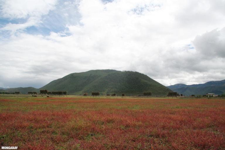 Red grassland