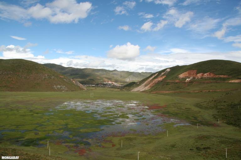 Flooded grassland in Yunnan