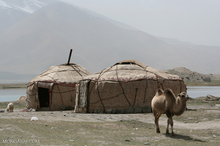 Camel and yurts on the shore of Lake Karakol