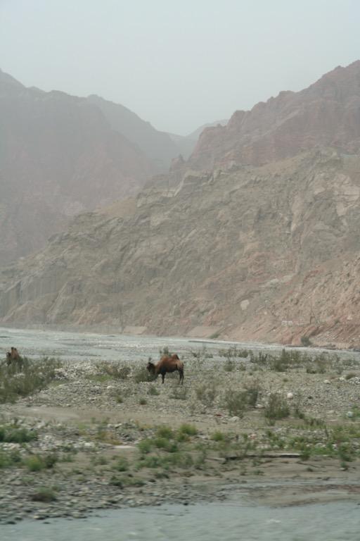 Camel along the Karakoram highwau