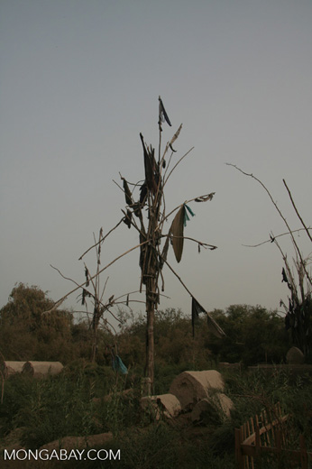 Clothes of the dead in a tree at the Tomb of Yarkand Kings