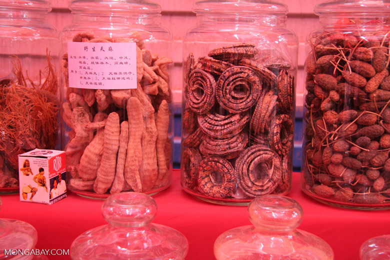 Dried coiled snakes in a Chinese market