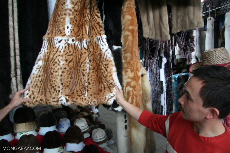 Wild cat furs for sale in a Chinese market