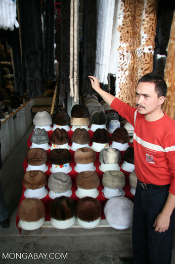 Exotic animal furs for sale in a Chinese market