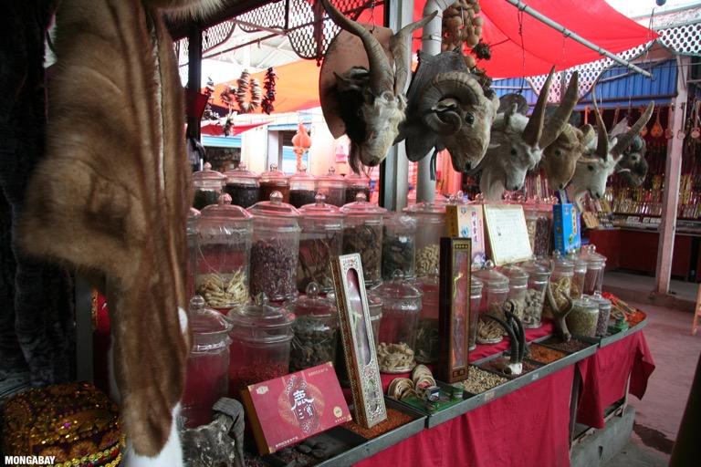 Dried animal parts in the Kashgar bazaar