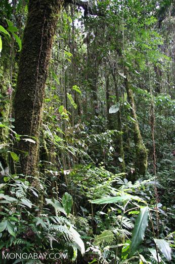 Santuario Otún Quimbaya cloud forest