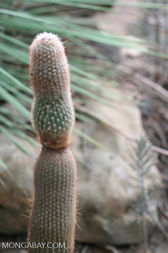 Cacti [br_co-9936]
