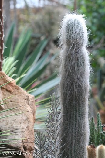 Cacti [br_co-9937]