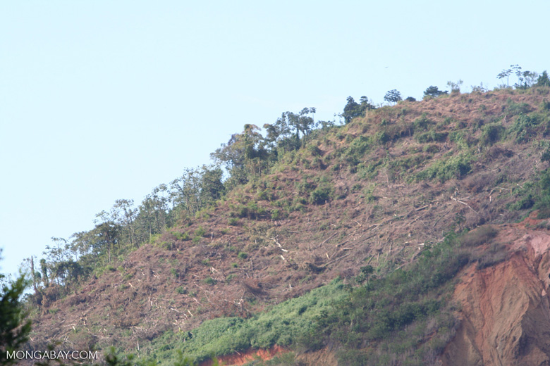 Deforestation of a hillside in Colombia