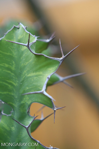 Unknown cactus [co02-0026]