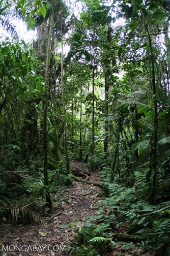 Forest trail inSantuario Otún Quimbaya