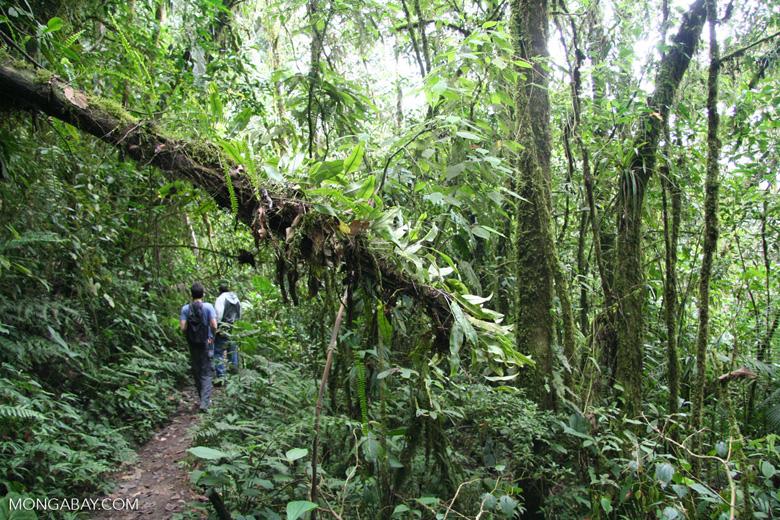 Epiphytes in Santuario Otún Quimbaya
