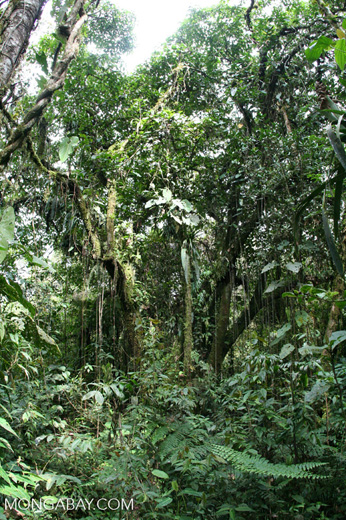 Cloud forest in Colombia