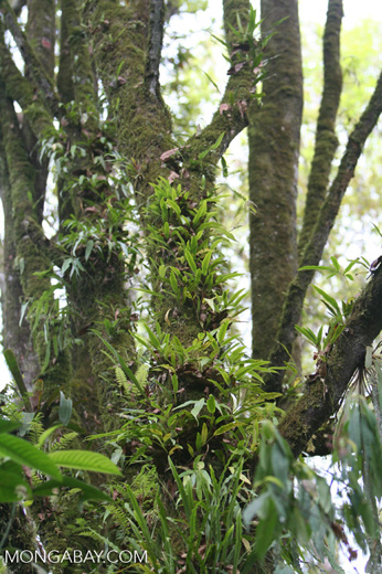 Orchids growing up the trunk of a tree in a Colombian cloud forest