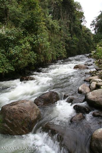 Rapids on the Otun river