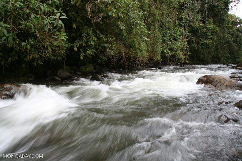 Fast-flowing Otun river