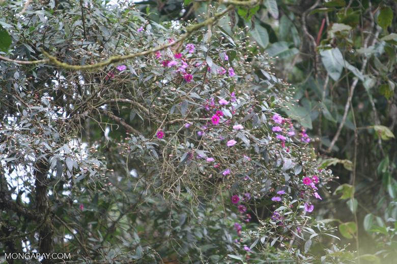 Fuschia-colored flowers