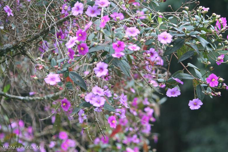 Fuschia-colored flowers [co03-9693]