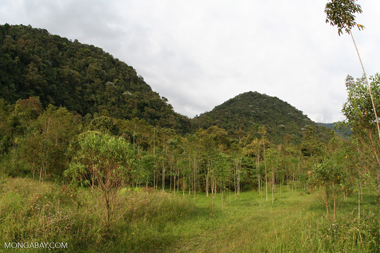 Tree-planting project in Colombia