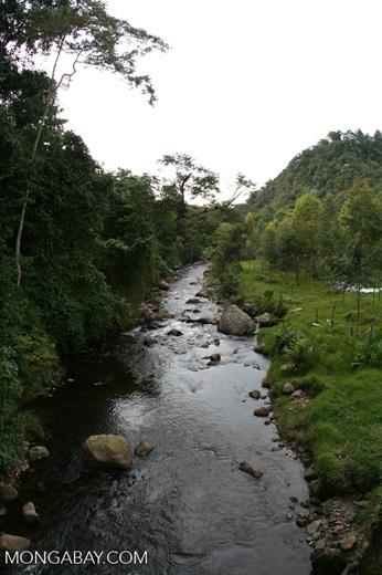 Creek in Santuario Otún Quimbaya