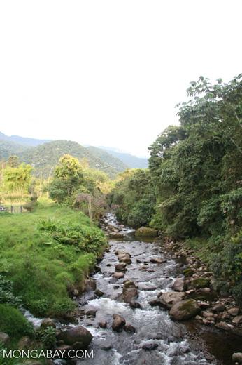 Creek in Santuario Otún Quimbaya [co03-9728]