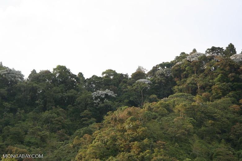 Canopy trees in Santuario Otún Quimbaya