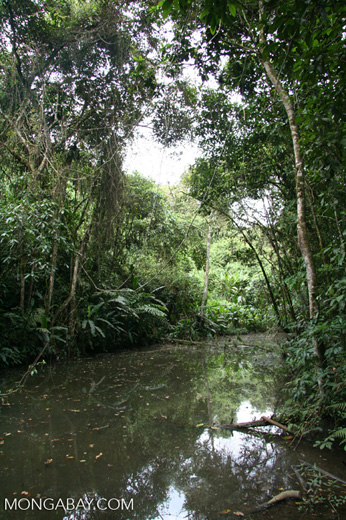 Colombian montane forest