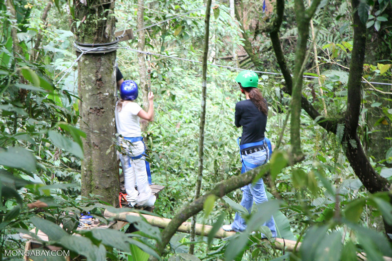 Tourists experiencing the rainforest canopy first hand in Colombia