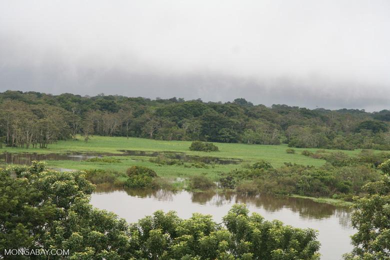 Amazon meadow