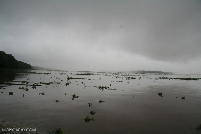 Amazon River in flood
