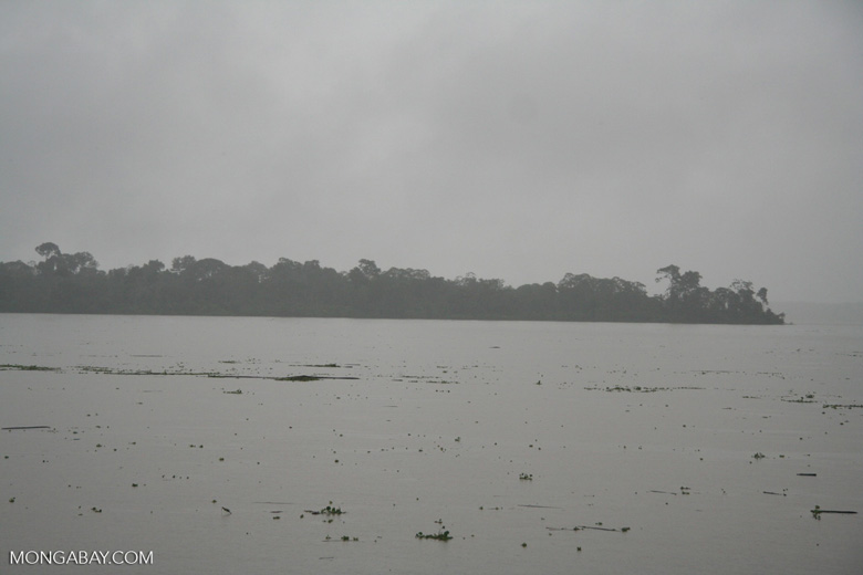 Flotsam in the flooded Amazon river