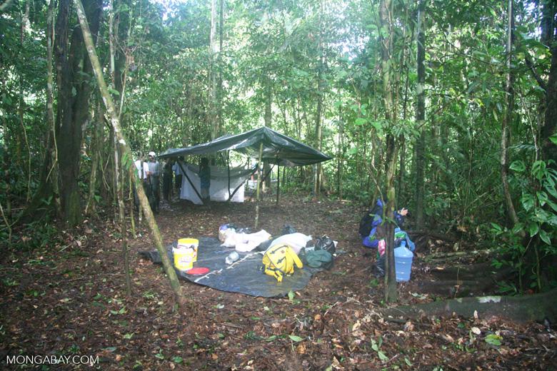 Amazon rainforest camp site set up, with tarp