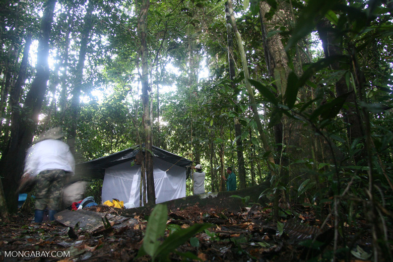 Camping in the Amazon rainforest