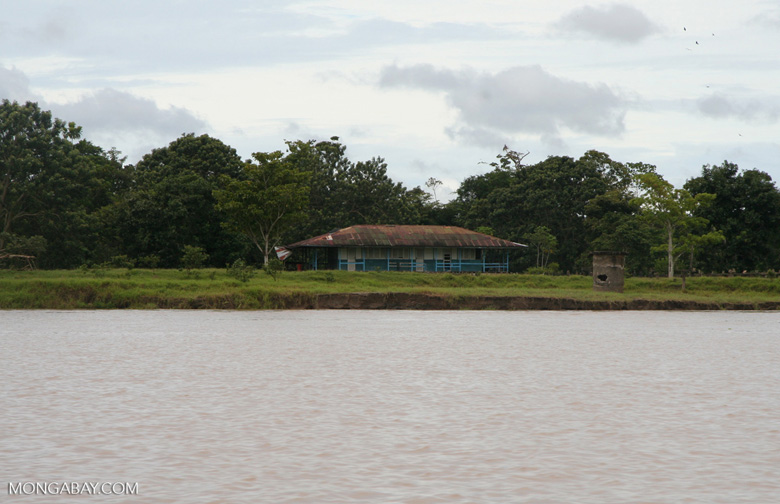 Amazon homestead