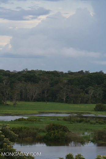 Amazon meadow near Puerto Narino