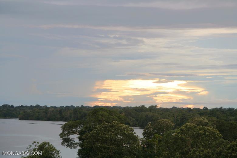Sundown in the Amazon rainforest