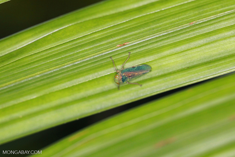 colorful leaf hopper by - photo #21