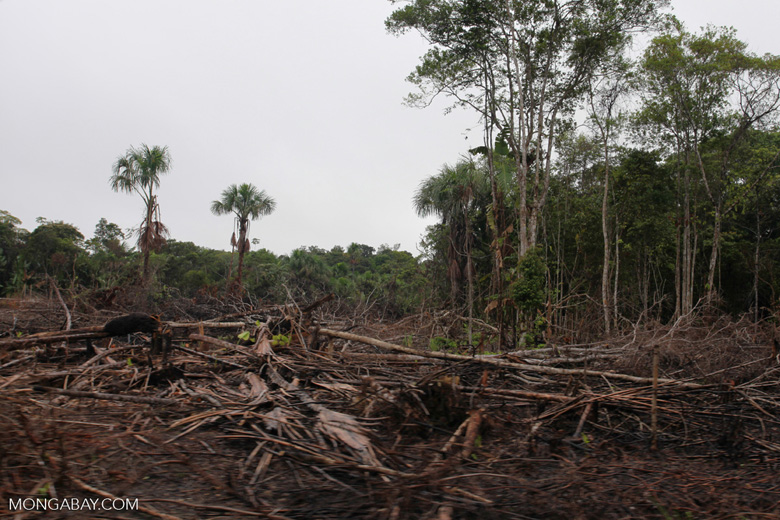 Deforestation in the Colombian Amazon