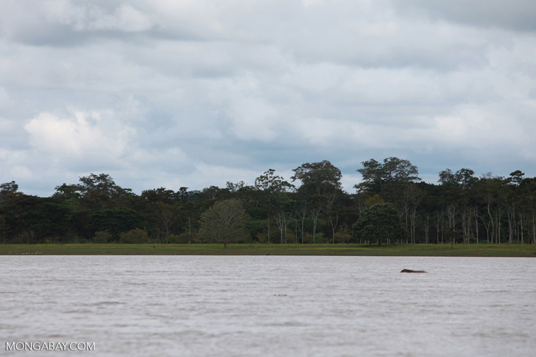 Pasture along the Amazon River in Colombia