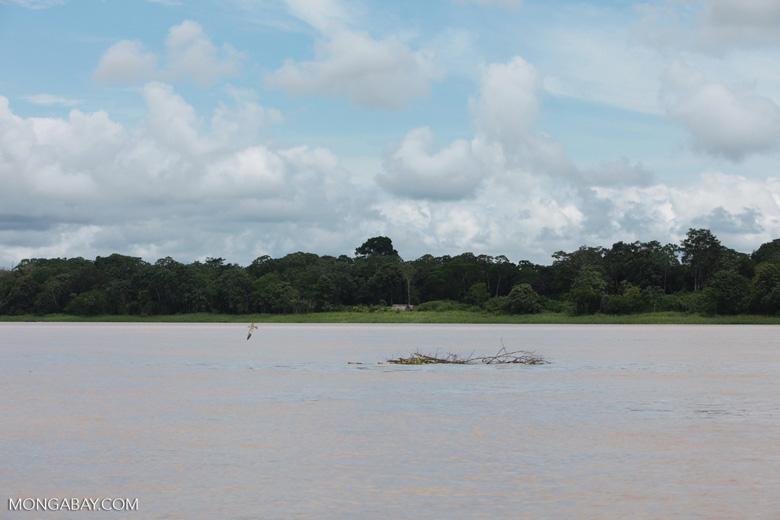 Maloka on the banks of the Amazon river