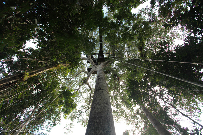 Canopy platform in Amacayacu National Park