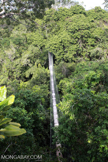 Canopy walkway in Colombia