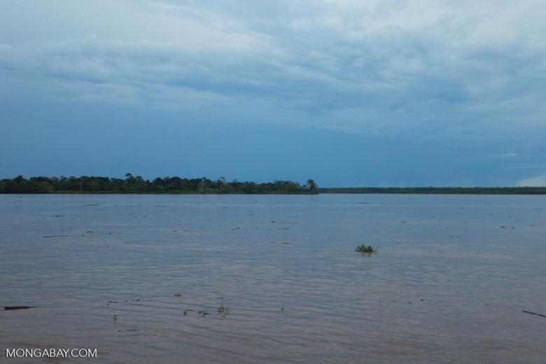Debrius floating down the Amazon