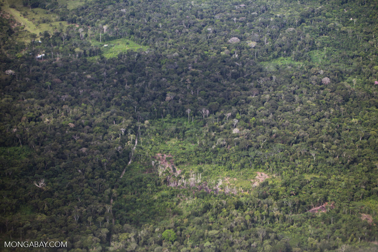Aerial view of small-holder forest clearing for cassava in the Amazon