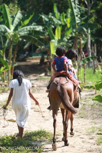 Arhuaco kids on horseback
