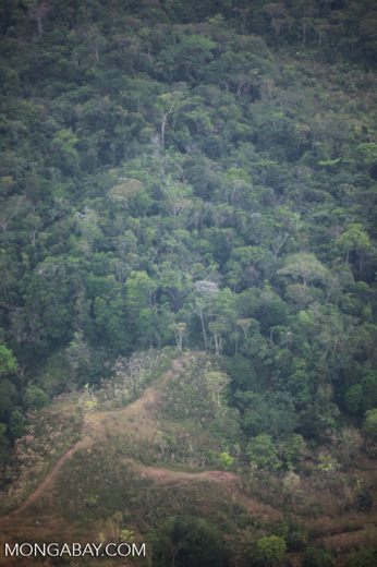 Pasture and forest fragment in the Colombian Choco [colombia_1729]