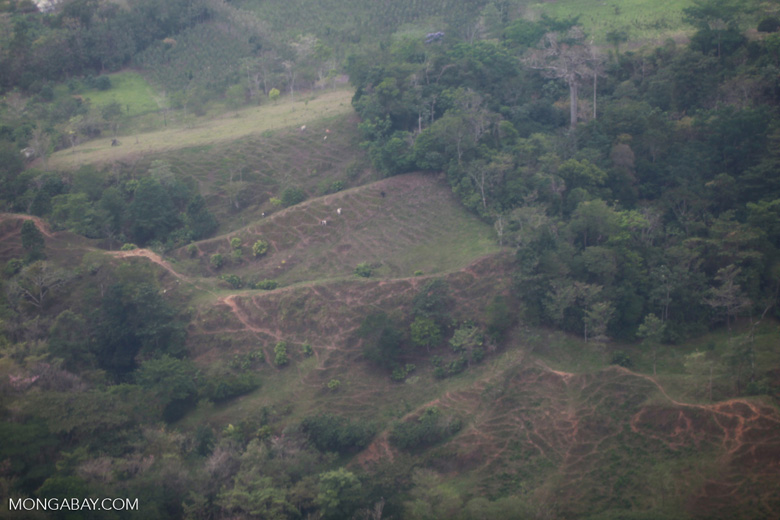Forest fragmentation/deforestation in the Colombian Choco [colombia_1743]
