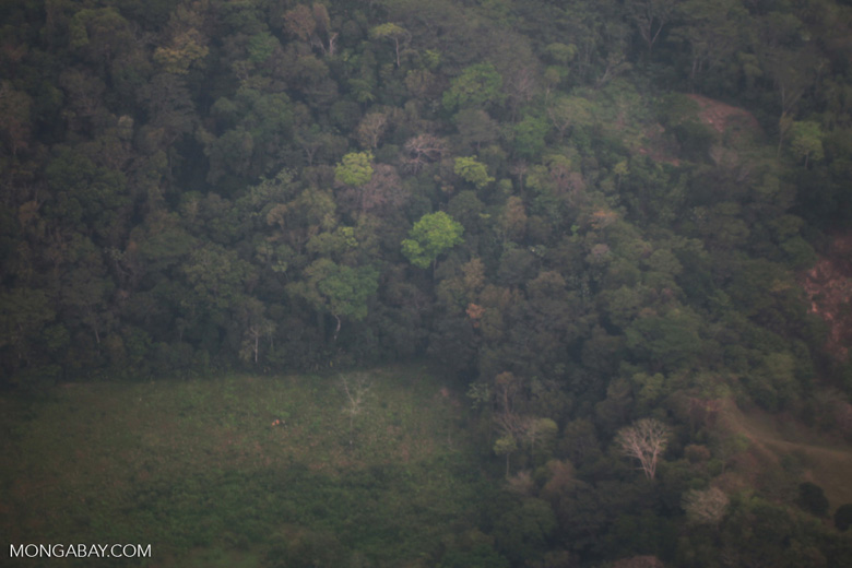 Deforestation for cattle pasture in the Colombian Choco