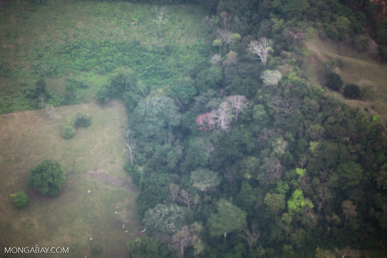 Deforestation for cattle pasture in the Colombian Choco [colombia_1802]