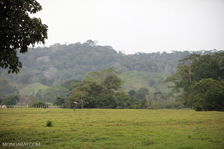Cattle pasture near Acandi [colombia_1855]